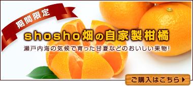 shosho畑の 自家製柑橘